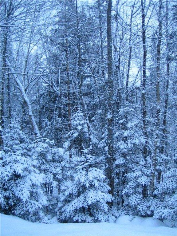 View of the woods in winter from the front porch