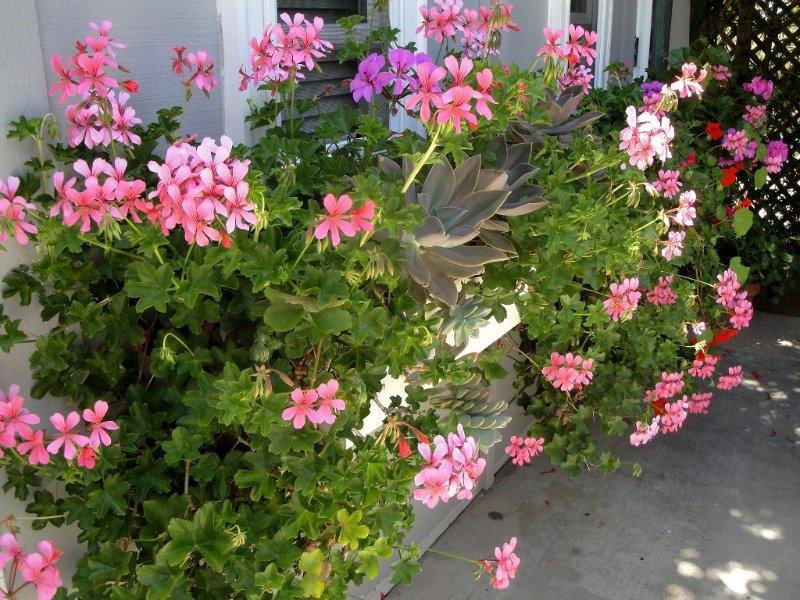 5 STAR LA JOLLA Bright & Charming HIDEAWAY! SPECIAL FALL AND WINTER RATES., vacation rental in La Jolla
