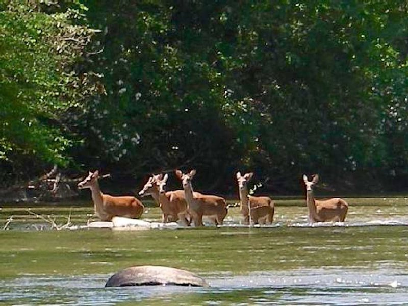 Deer Creek!