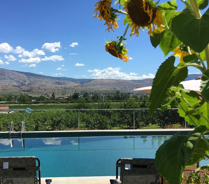 3 Acres with Pool & Vineyard in the Wine Capital of Canada - truly unique rental, holiday rental in Okanagan Falls