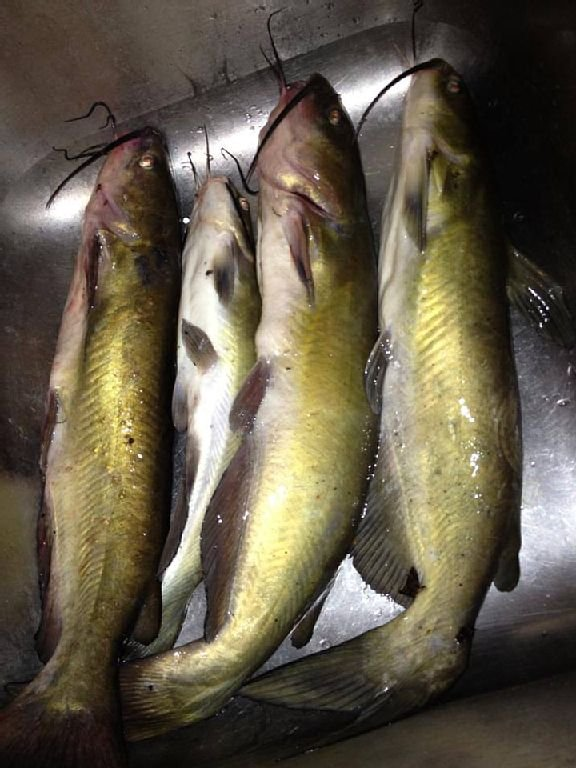 Lynn's Catch of the Day!