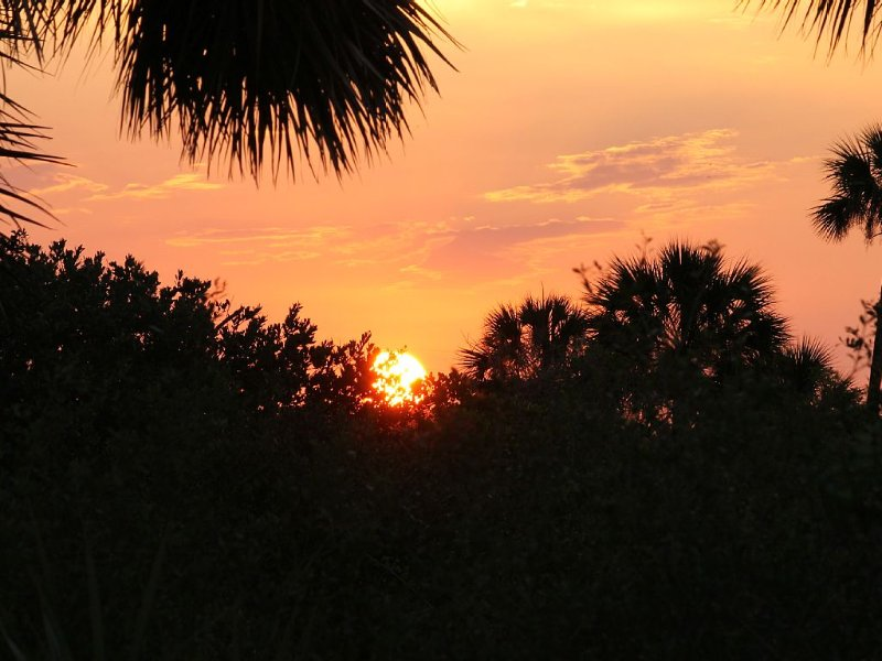 Sunrise over the palms... Nothing like life in Florida!
