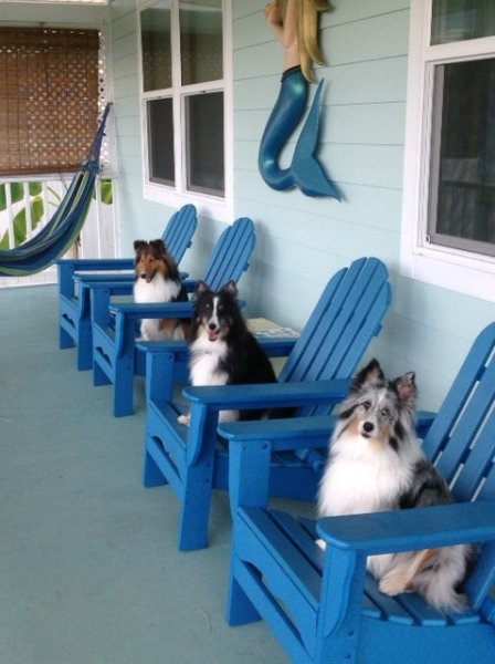 Pets love The Mermaid Cottage....and we love your pets.