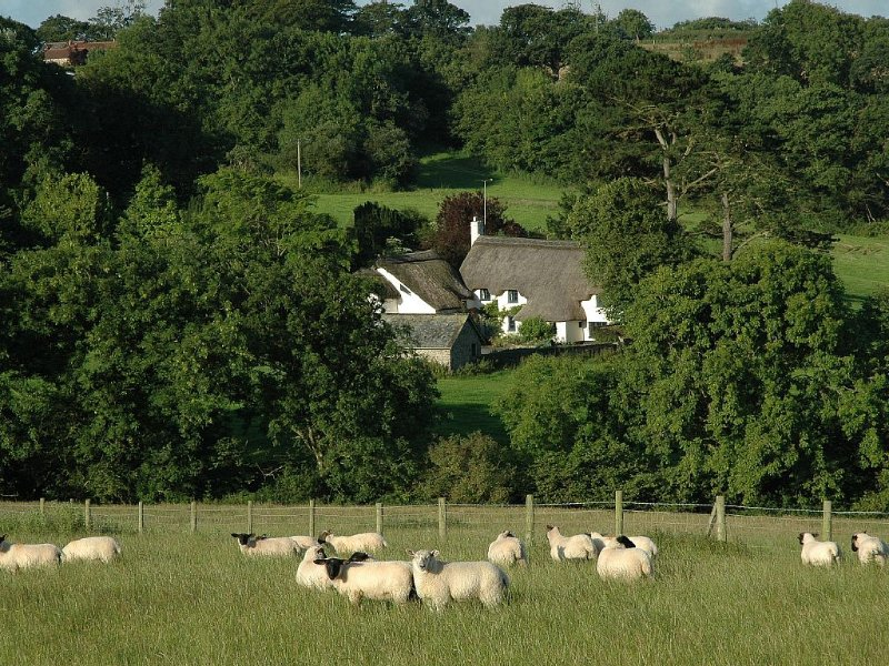 16th Century Thatched Cottage in an Acre of Mature Gardens, alquiler vacacional en Bideford