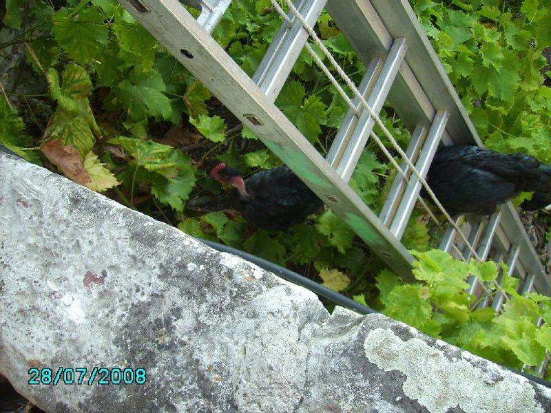 Vista de pollos SAS capacitados de terraza cubierta que suben la escalera -