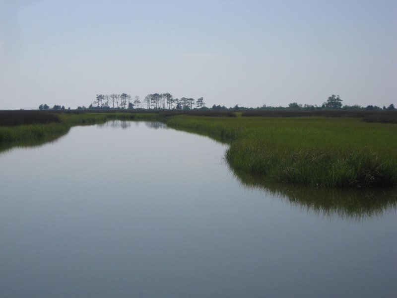 Peaceful marsh. Bald eagles are frequently seen in this area