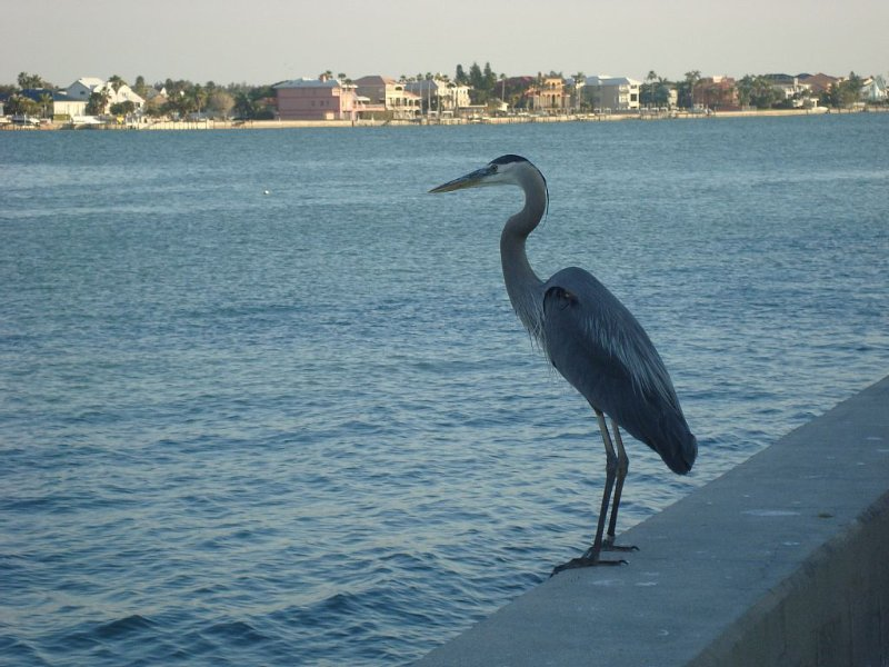 Get a bird's eye view from the seawall along the bay, just a half block walk
