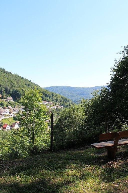 Ausblick - nahegelegener Wald