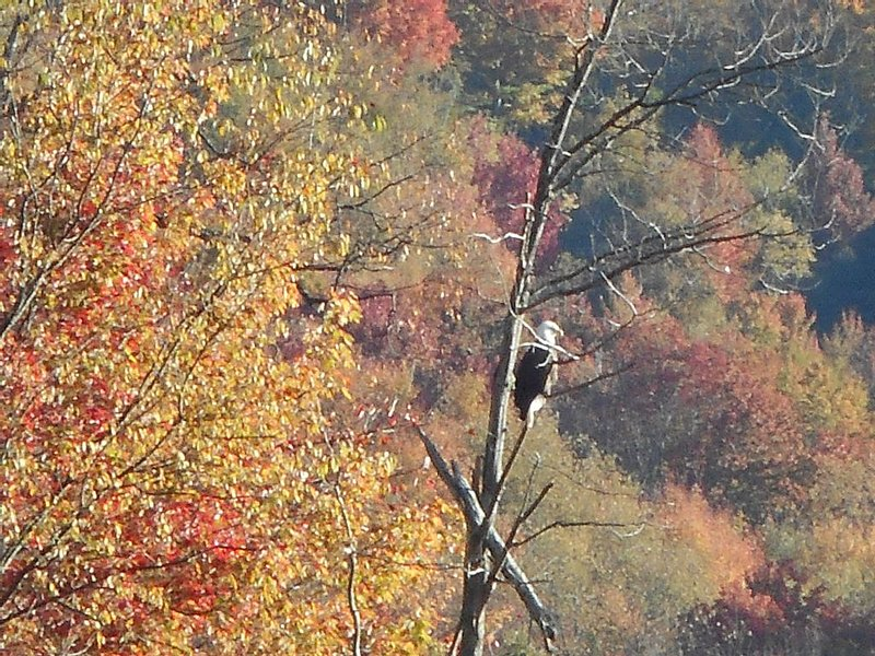 Photo taken 10/12/16 at 7:30am- Eagle hanging out at the lake!!!