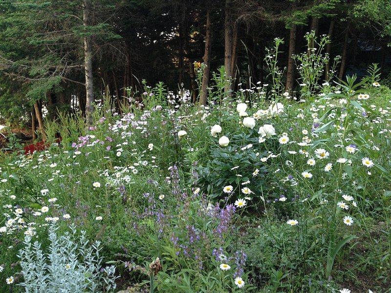 Wildblumen und Stauden gibt es zuhauf!