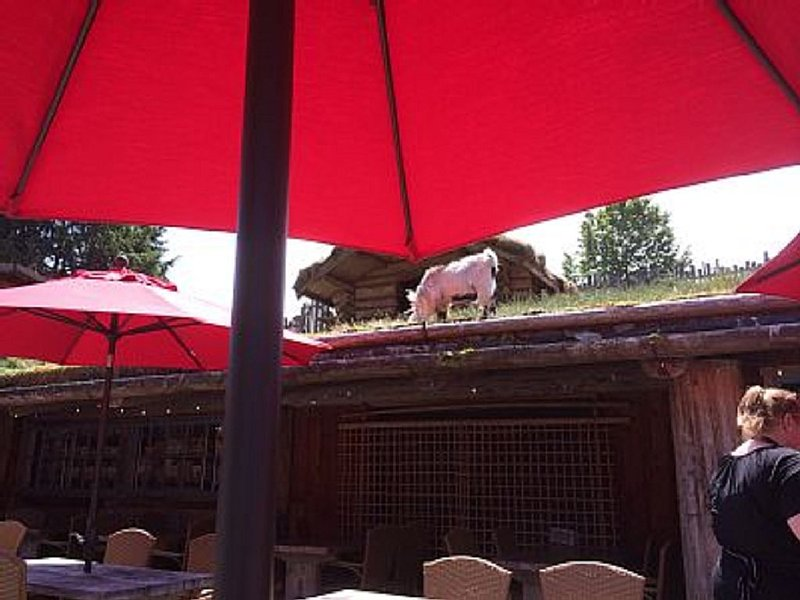 Coombs Markets, Goats on the Roof