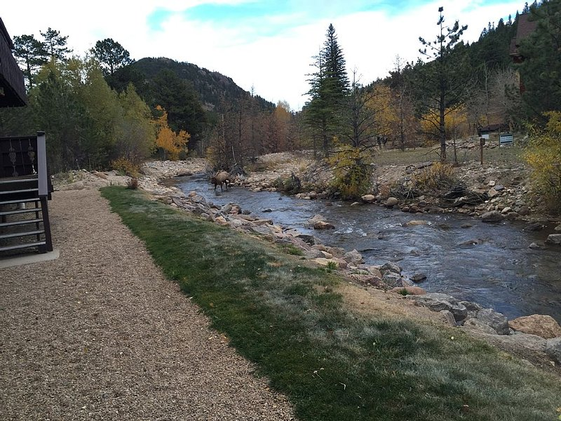 Condo on the Fall River in Estes Park, CO, vacation rental in Estes Park