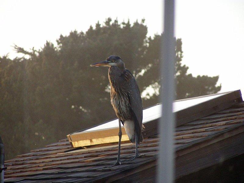 Heron on Pump House Through Window