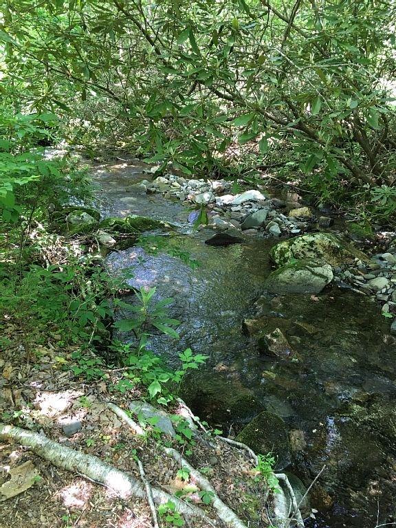 Collett Creek