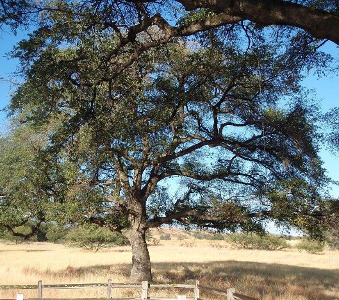 Close to Wineries, Kartchner Carverns, Patagonia, Cozy, Quiet, Scenic View, alquiler vacacional en Sonoita