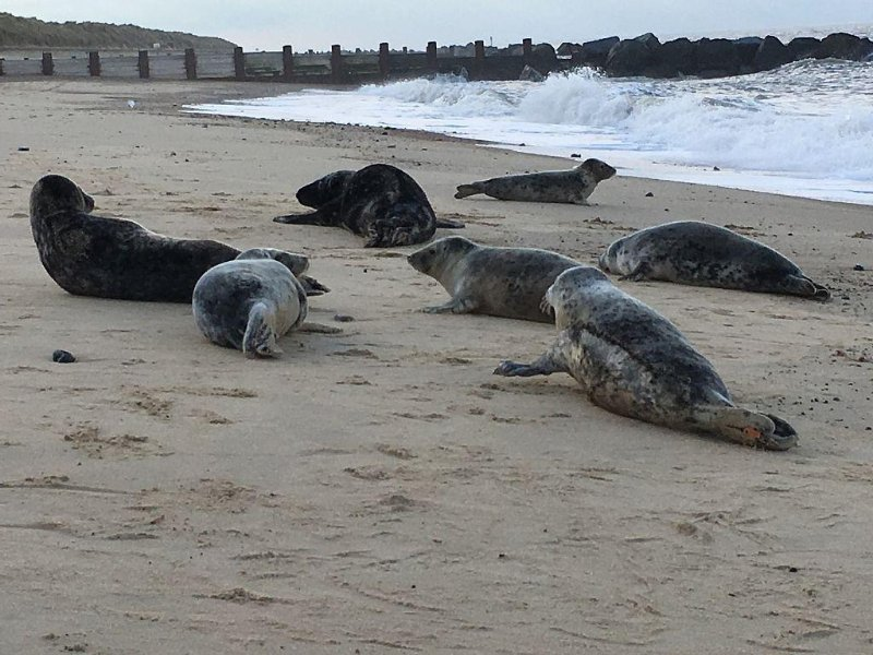 A visit to Horsey to see the seals