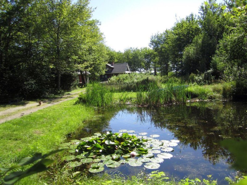 Summer on 20 acres of privacy