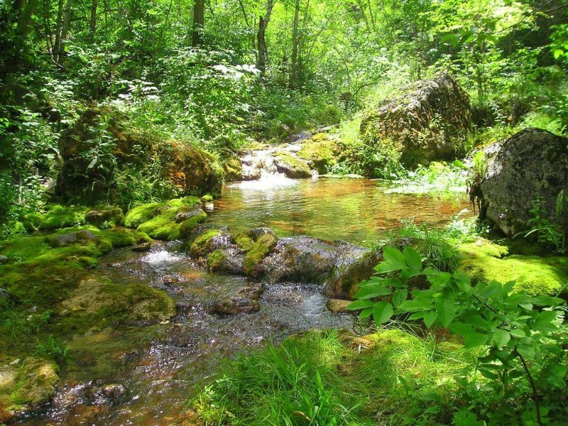 Hike a short distance to beautiful, botanical treasures of the Black Hills.