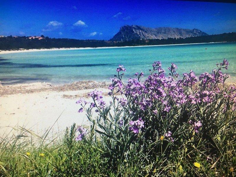 Puntaldia Incantevole abitazione sul porto terrazza vista mare vicino la spiaggi, vacation rental in San Teodoro