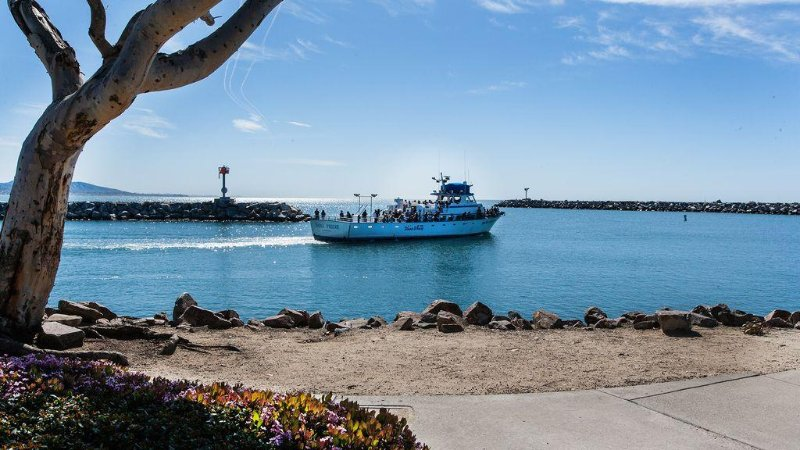 Harbor cruises and whale watching daily