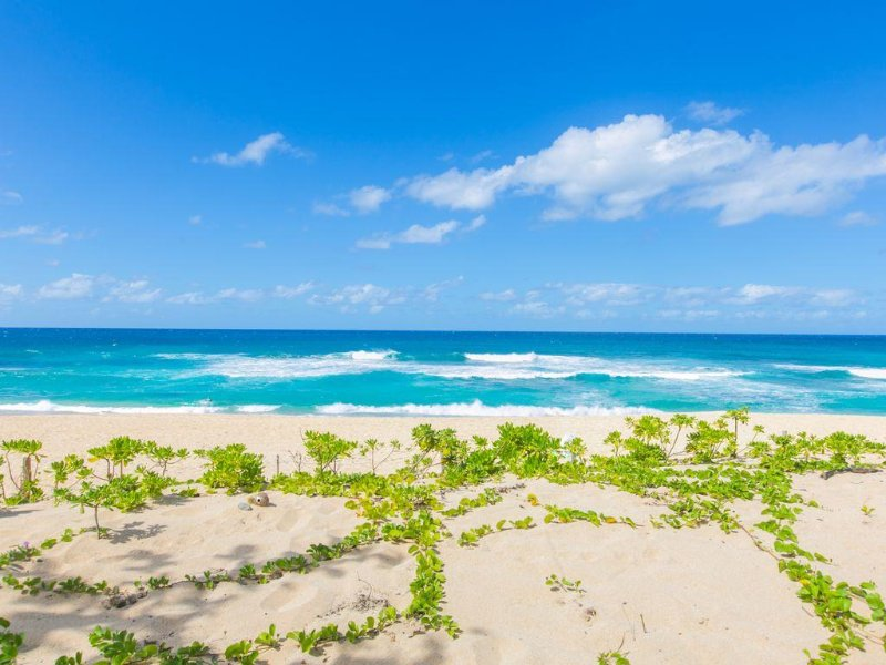 OCEANFRONT NORTHSHORE HOME | ALOHA BEACH & SURF | ROCKY POINT & SUNSET BEACH, holiday rental in Haleiwa