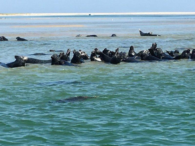 Visit the seals!
