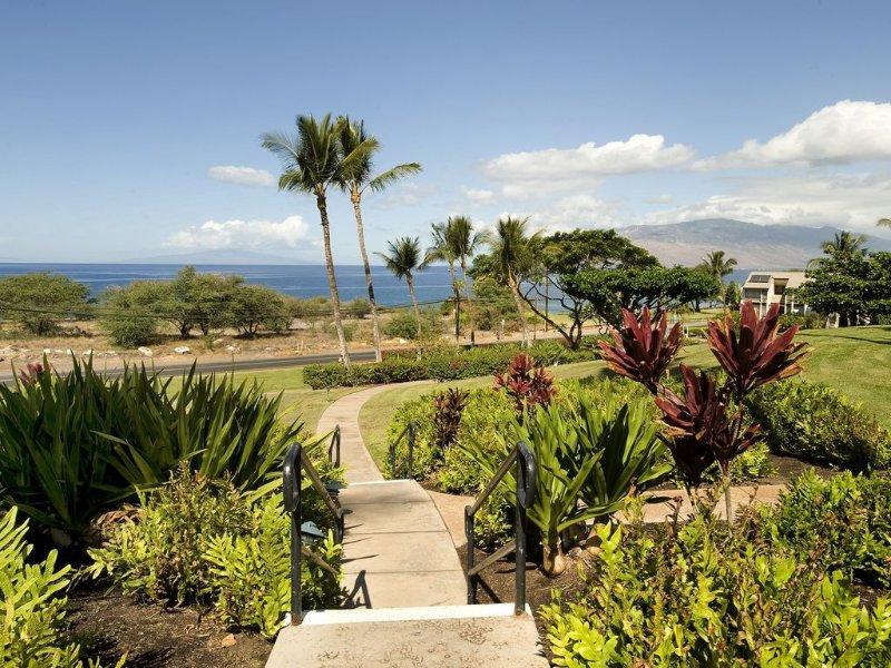Jardín, palmera, árbol, flor, vegetación