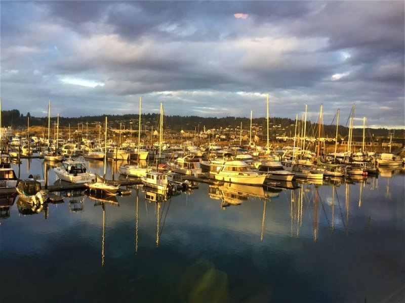 View of the marina from the rogue brewery