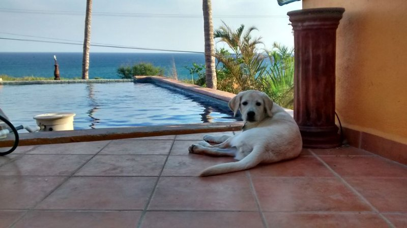 Casa Mango in Palapas Resort, San Jose Del Cabo, across from beach, OPEN & SAFE, holiday rental in Animas Bajas