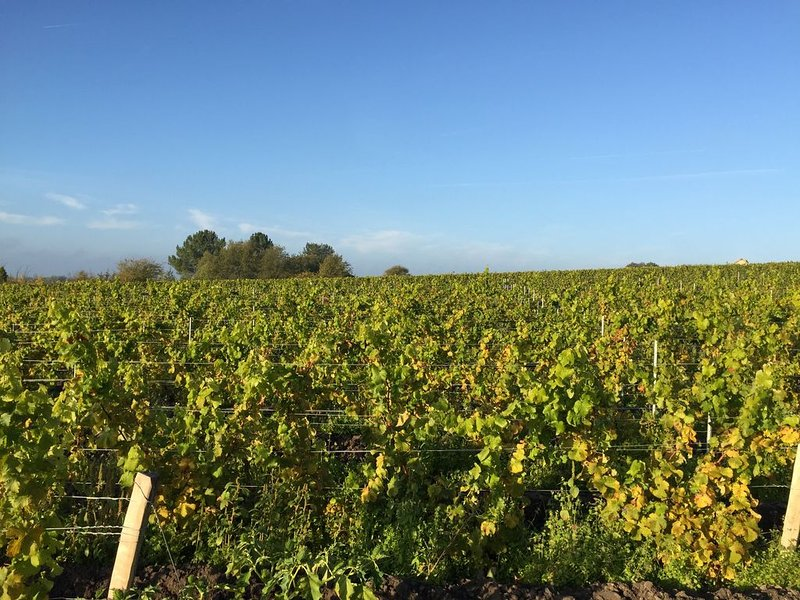 Wine Valley, discover the local production of Gamay, Cabernet Sauvignon de Touraine