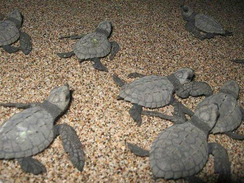 Casa en el árbol de Playa Avellanas: crías recién nacidas