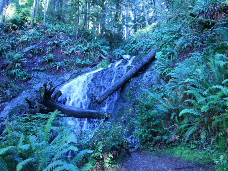 Wonderful day hike through the redwoods - The Boy Scout Trail in a local park.