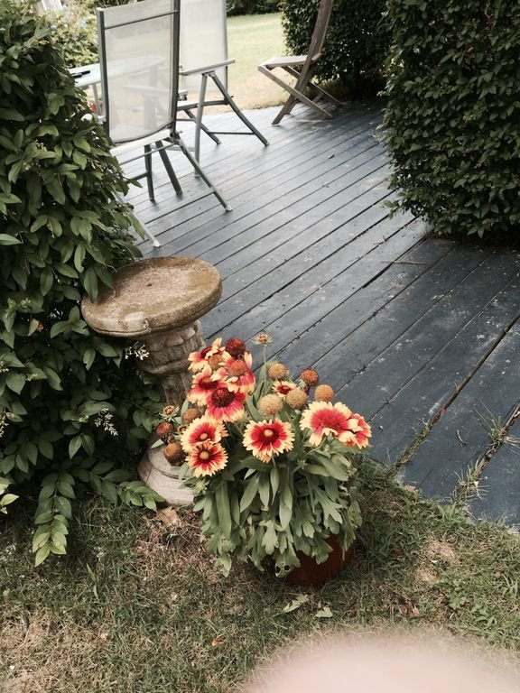 patio in front yard