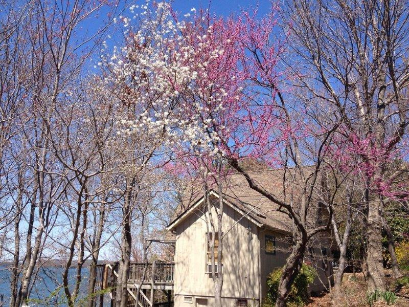 flores da primavera na propriedade