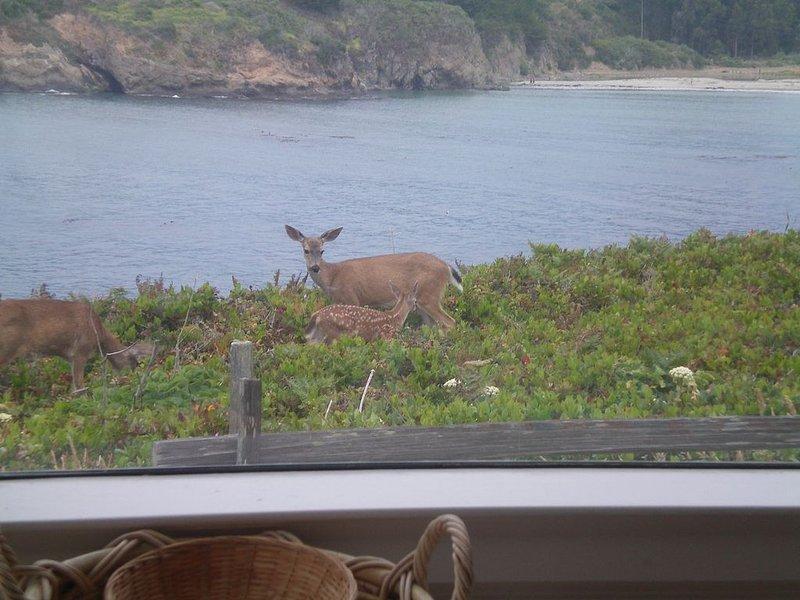 Visitantes locales, una cierva y su cervatillo justo afuera de las ventanas del comedor