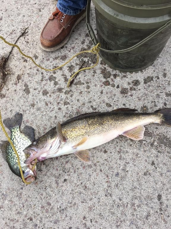 For fishing: 5 lb walleye, 26' off the Pier in Ortonville! Early morning, 5/8/18