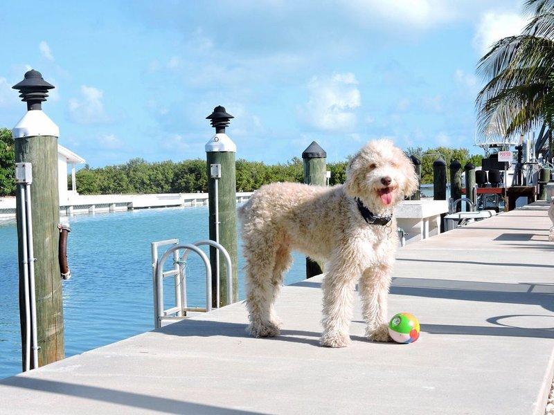 Available March Spring Special $2,000 wk~KCB Home with 30' dockage, aluguéis de temporada em Key Colony Beach