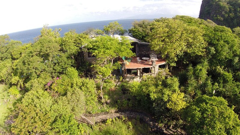 Burke surrounded by lush tropical tree on the ridge overlooking the ocean