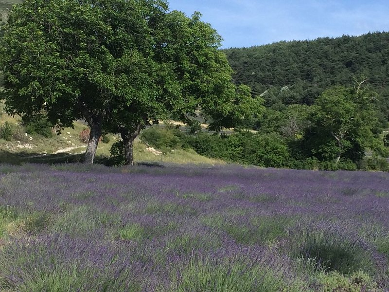 Aux Pays des Lavandes , dans le Hameau de Pelleret, 800 mètres d'altitude., vacation rental in Saint-Andre-de-Rosans
