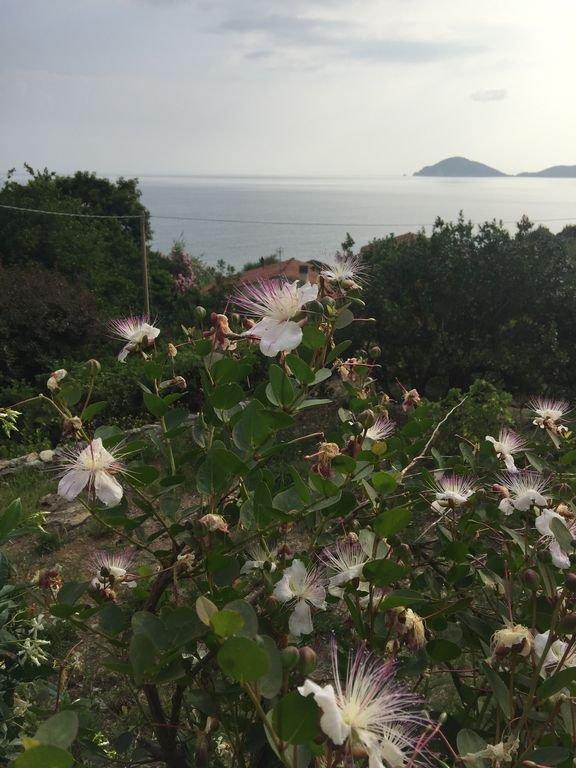 alcaparras terraza en el mar