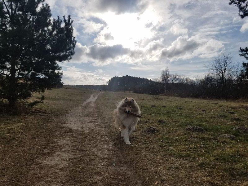 Walk on Feisnecksee
