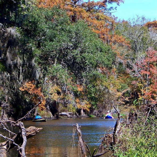 Santa Fe River kayakers near Rum Island County Park during the fall.
