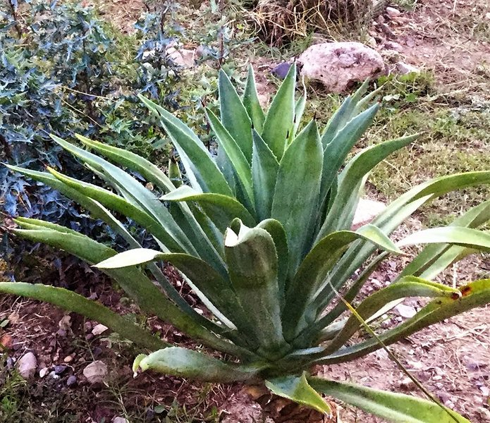 Promenez-vous dans le jardin de cactus
