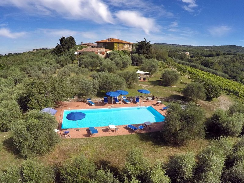 Swimming pool among olive trees and nearby vineyards