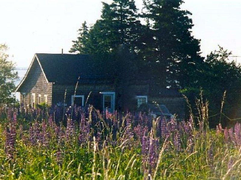 Summer Cottage In Exquisite Coastal Maine Spot, location de vacances à Brooklin