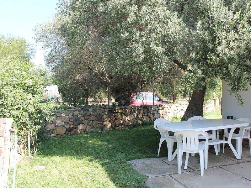 aperçu de la cour avec un olivier centenaire