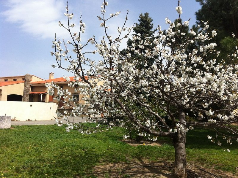 'La Maison Catalane'4/5/6/7/8 pers,Prix dégressif, jardin 2800 M2, piscine,clim, holiday rental in Ille-sur-Tet