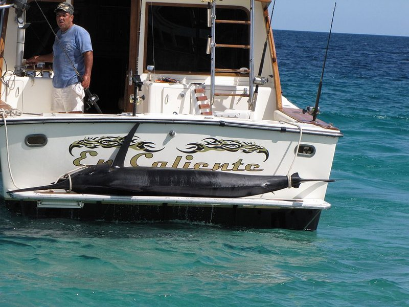 Book a full or 1/2 day fishing or whale watching aboard the En Caliente.