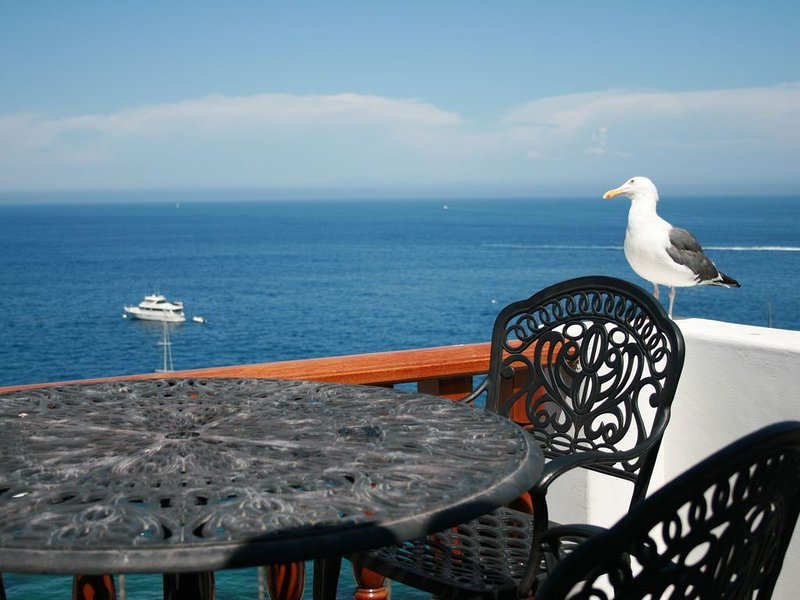 Hamilton Cove ocean front luxury Villa ***Spectacular Views***, aluguéis de temporada em Avalon