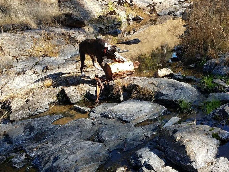 A su familia y sus cachorros les encantará caminar por Big Creek Trail
